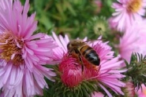 zomer en wespen